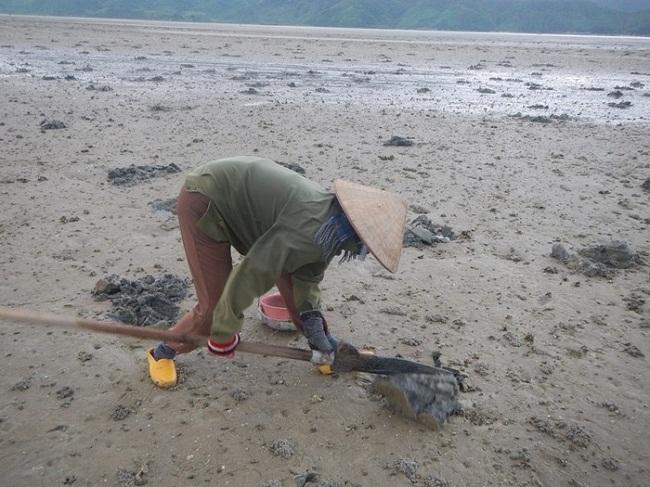 Đánh bắt sá sùng tại bãi cát ven biển