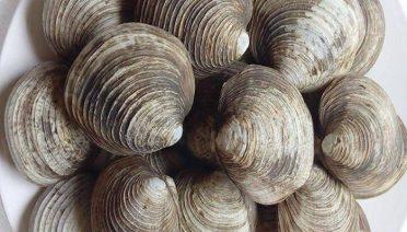 Cách chọn ngán Quảng Ninh đảm bảo chất lượng khi sử dụng