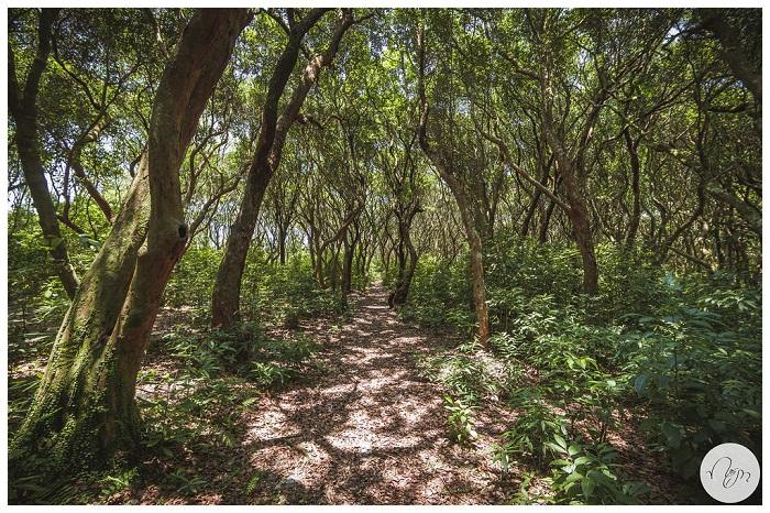 Rừng Trâm cạnh bãi Minh Châu